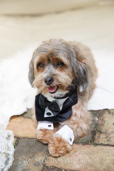 Puppy Love Ideas for Your Wedding Day