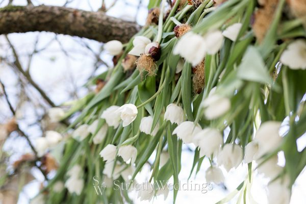 Tulip Fever Beyond the Bouquet